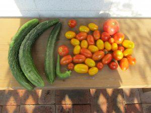 家庭菜園収穫終了
