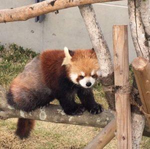 徳山動物園