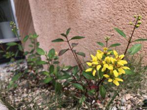 季節の花でお出迎え